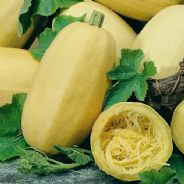 Winter Squash Spaghetti -  25 grams - Bulk Discounts available